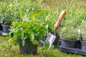 Planting mint and other mixed herbs
