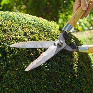 landscaping shears